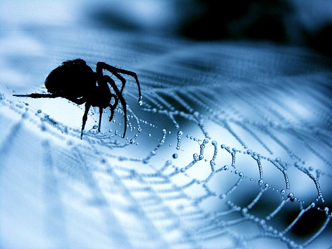 """a comparison of the life of a noiseless patient spider and the life of the author Compare this poem to read """"time to come"""" and """"song of myself"""" and discuss the differences between early and late whitman a noiseless patient spider."""